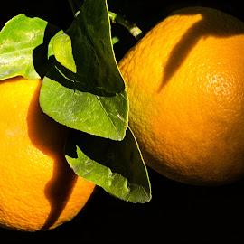 Oranges by Dave Lipchen - Food & Drink Fruits & Vegetables ( oranges )