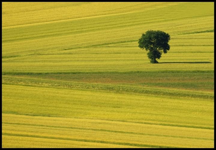 L'albero solitario di Francesco_Segantini