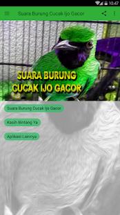 Suara Burung Cucak Ijo Gacor Screenshot