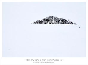 Photo: Winter Tree, Burnsall, Yorkshire, England