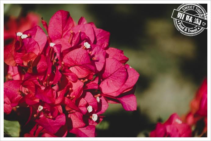 中都濕地公園花