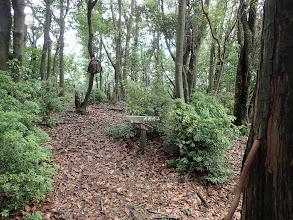 オロチ山(大河内山分岐)
