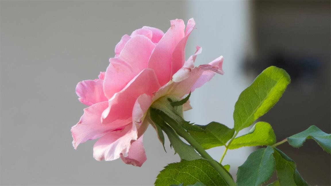 Raw Pink.jpg