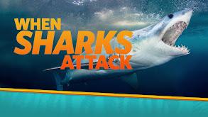 Sharks Attack ! thumbnail