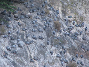 Photo: pigeons on a rock in Gangotri