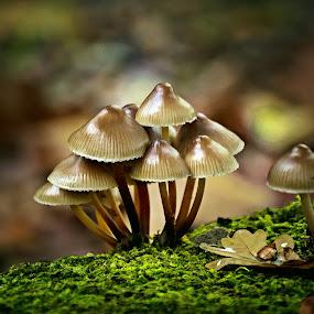 Embraced each other.  by Miguel Silva - Nature Up Close Mushrooms & Fungi ( wood, miguel silva, moss, nature up close, viseu, leaf, portugal, fontelo, light, mushrooms )