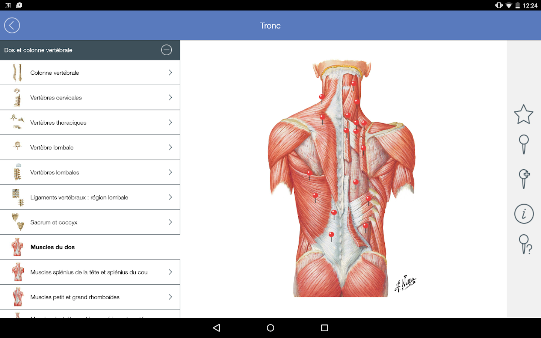 Tolle Netter Atlas Of Human Anatomy Pdf Zeitgenössisch - Menschliche ...