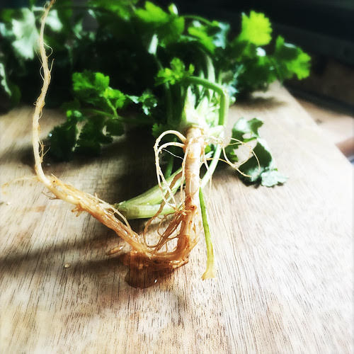 cilantro, coriander, hot to keep, how to store, parsley, 胡荽葉, 芫茜, 香菜, grow