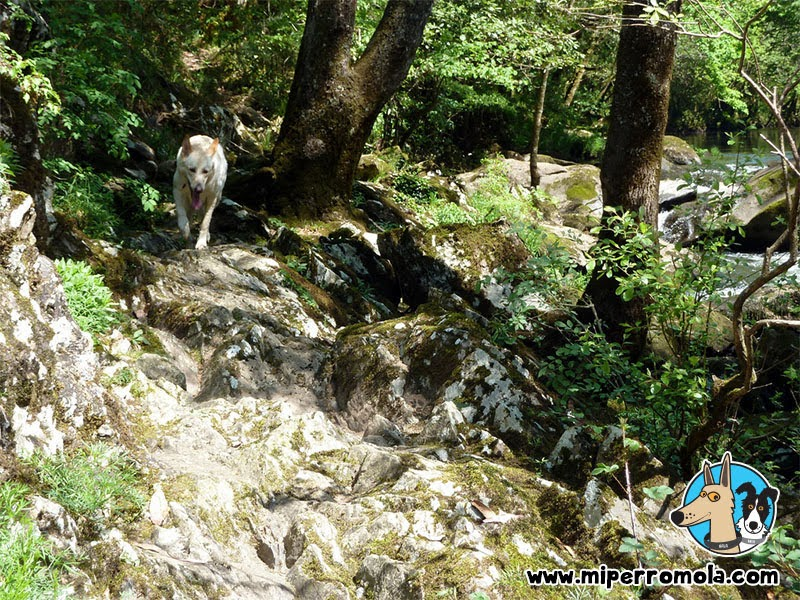 Senderismo con Perro Chelo Fragas do Mandeo, A Coruña con un Can de Palleiro y un Border Collie