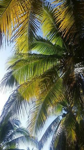UHD Tropical Wallpapers