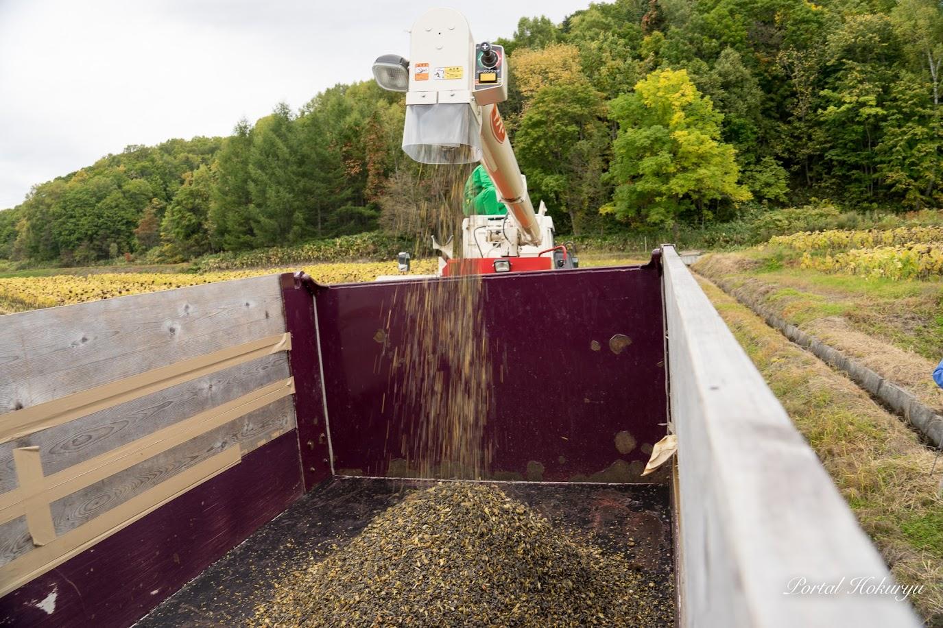 トラックの荷台に積み込まれるひまわりの種