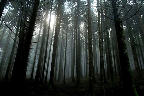 Il silenzio della foresta che cresce di gigidueelle