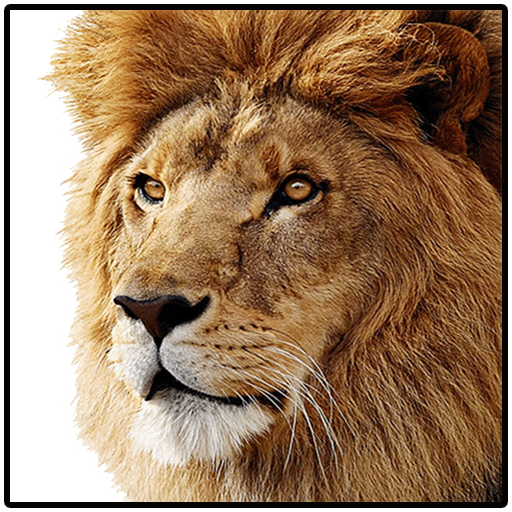 Lion: The King Of Jungle Android APK Download Free By GskGamesProduction