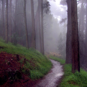 Fog and Drizzle by Gary Pope - Landscapes Forests ( fog, trail, trees )