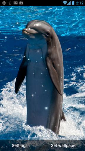 玩免費個人化APP|下載海豚動態壁紙 app不用錢|硬是要APP