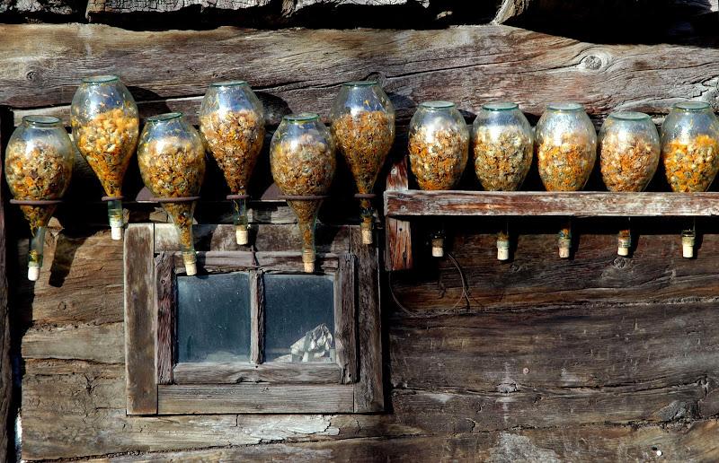 Bottiglie con fiori di arnica al sole di benny48