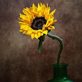 Sunflower by Stacey Bates - Flowers Single Flower ( vase, sunflower, bloom, yellow, flower,  )