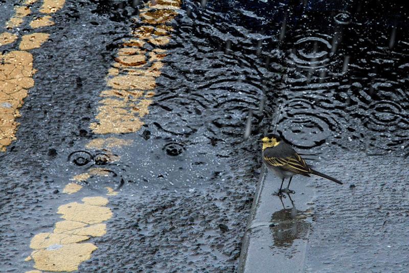 ..scende la pioggia ma che fa..? di Erre-Gi