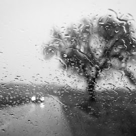 autumn rain by Željko Grganić - Black & White Street & Candid ( path, rain, raindrops, stablo, tree, strmac, kapi, put, raindrop,  )