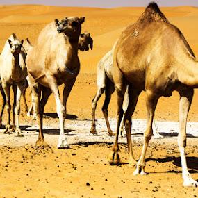 ROW by Arslan Mughal - Animals Other Mammals