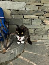 Photo: The resident cat Truffles