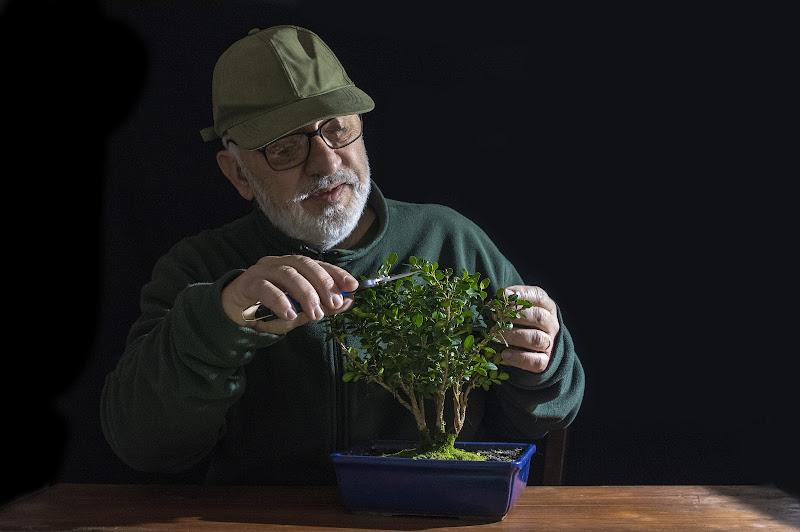Cura dei Bonsai di Tacca