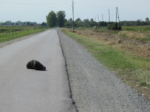 Photo: on trouve de tout sur les routes croates..