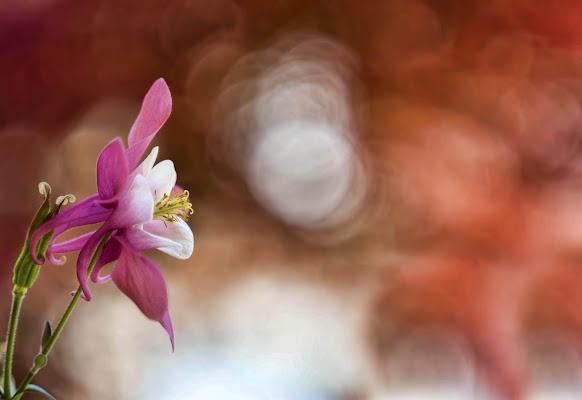 flower di Cinzia_torelli