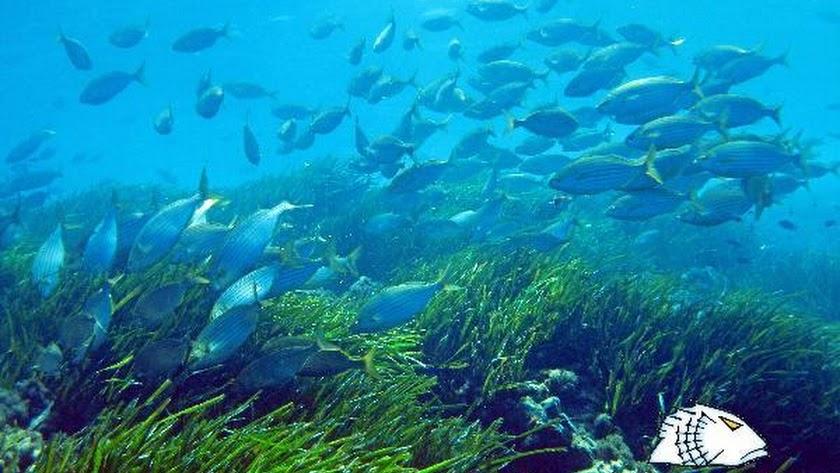 Fondo marino en Cabo de Gata.