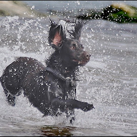 Splashing dog by Deleted Deleted - Animals - Dogs Playing