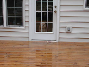 Photo: And We Clean Decks Call 704-806-3002 The Right Choice Pressure Washing Charlotte