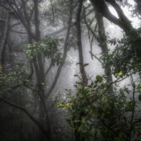 The Enchanted Forest by Aparajita Saha - Landscapes Forests ( foliage, mysterious, enchanted, forest, leaves )