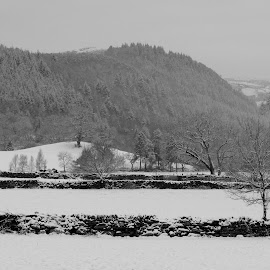 Mynydd Garthmyn by DJ Cockburn - Landscapes Forests ( uk, monochrome, betws-y-coed, black and white, wales, winterscape, forest, conwy, dry stone wall, landscape, grayscale, winter, nature, cold, tree, conwy valley, mynydd garthmyn, snow, snowscape, snowdonia, clwyd, pine, britain )