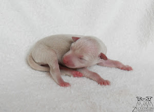 Photo: DAYLIGHT DESIRE z Koloseum - 1 day old