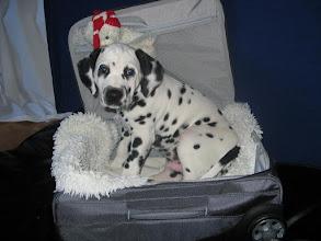 Photo: Koffer gepackt - Calimero