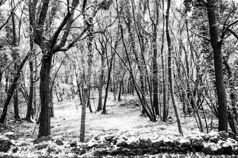 nell'incanto della foresta di lugiube