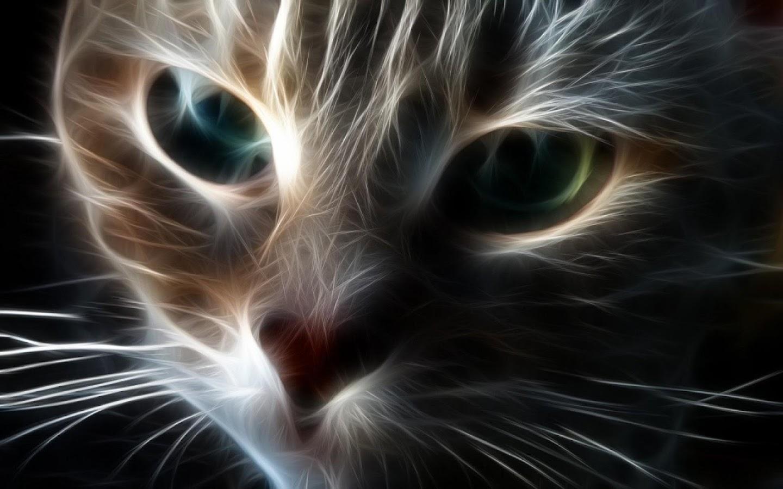 Hd wallpaper cat - Cat Wallpapers Hd 4k Screenshot