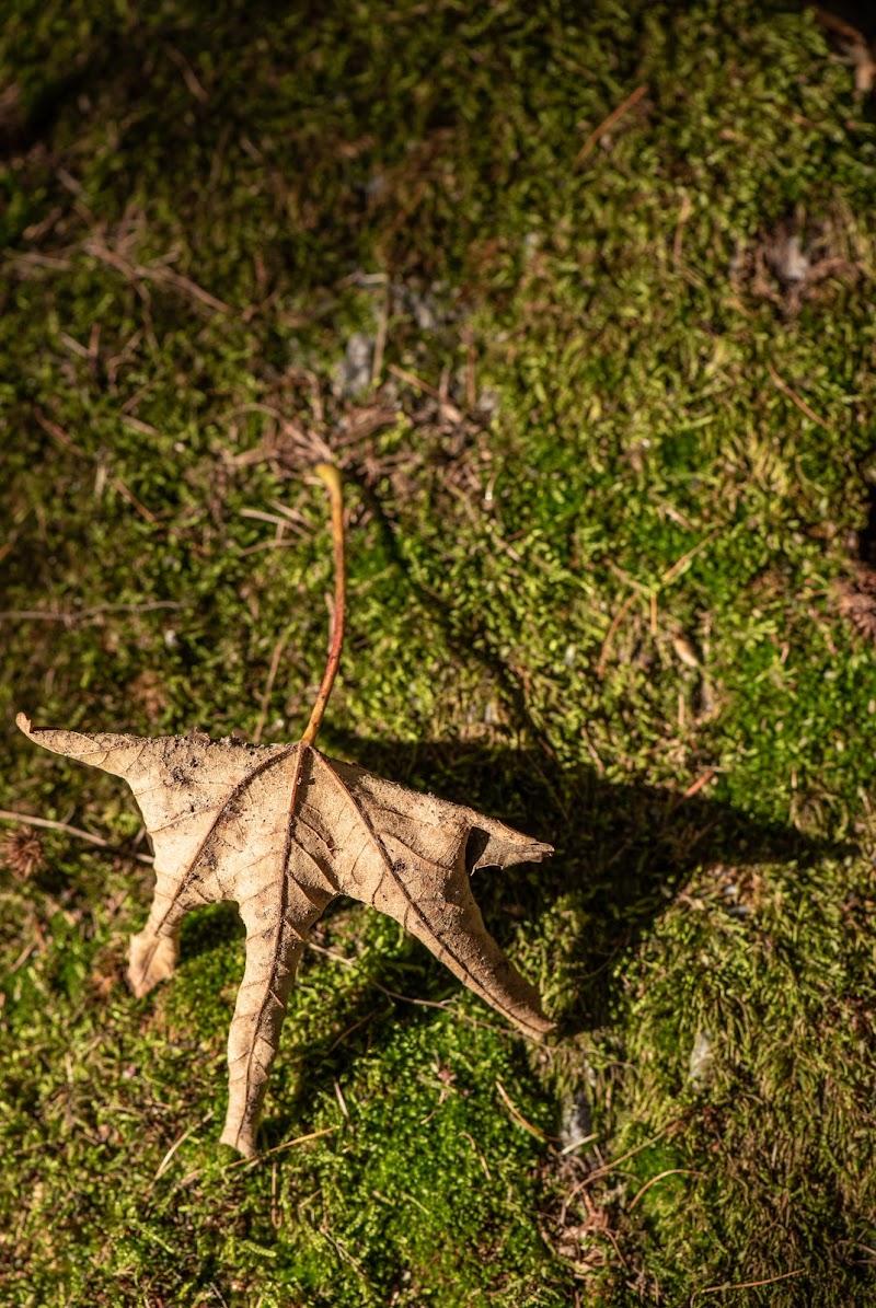 Le foglie ci raccontano le stagioni di Lorenzo Lucatelli