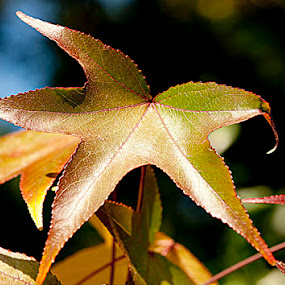 Glorious Colors by Merna Nobile - Nature Up Close Leaves & Grasses ( colors, october, leaves )