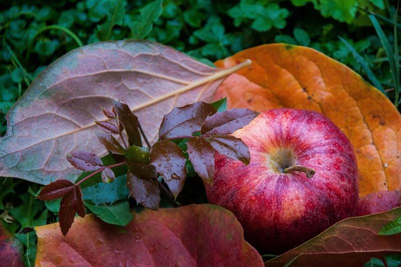 cogli la prima mela di domenicolobinaphoto