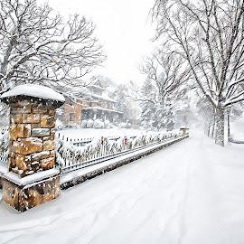 Winter Wonderland by Peter Stratmoen - City,  Street & Park  Neighborhoods ( minnesota, winter, summit avenue, snow, nikon 850, st. paul,  )