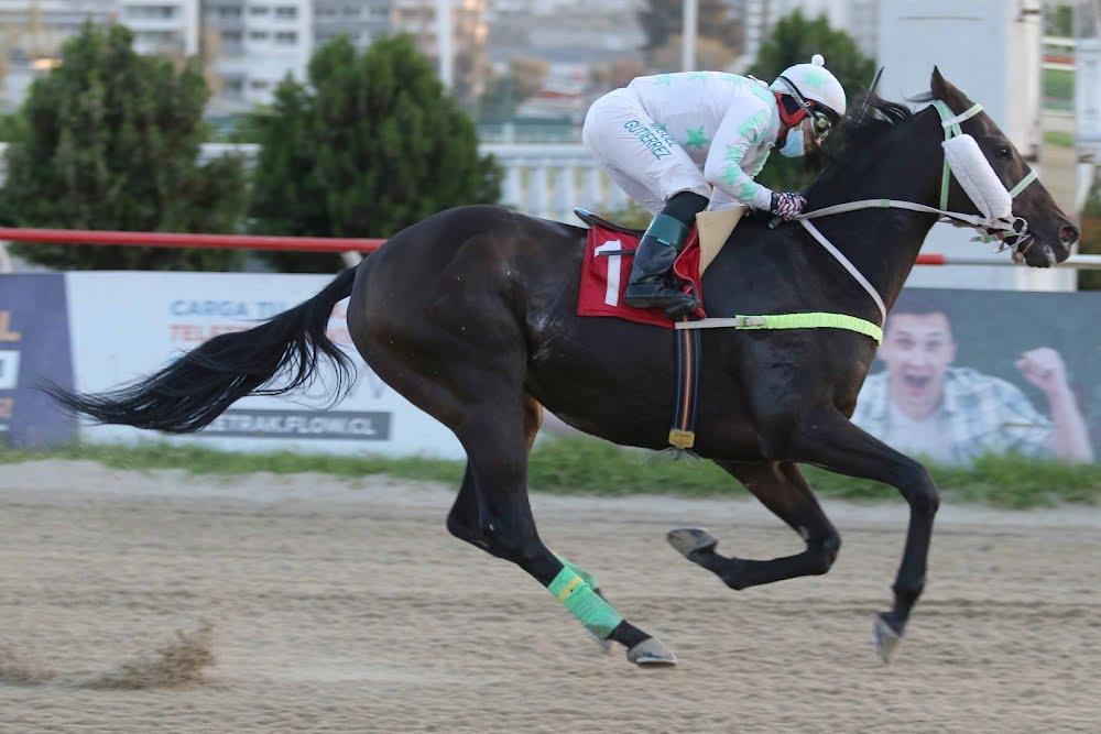 Soy Pullami (Distorted Economy) gana Handicap (1100m-Arena-VSC).