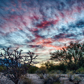 Red White and Blue by Charlie Alolkoy - Landscapes Deserts ( mountain, desert, arizona, tucson, cactus )