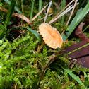 Orange Moss Cap