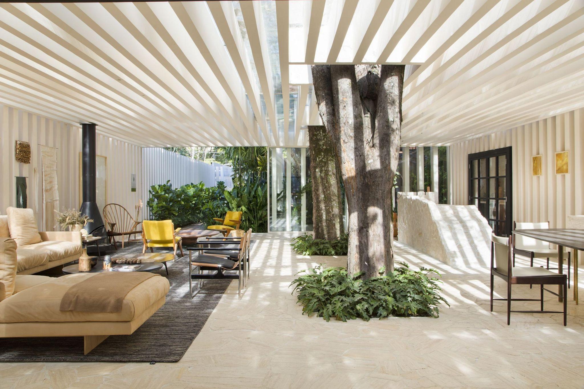 รวมสุดยอด 6 ต้นไม้ปลูกในบ้านให้ร่มเงา ที่น่าปลูก พร้อมวิธีดูแล !  02