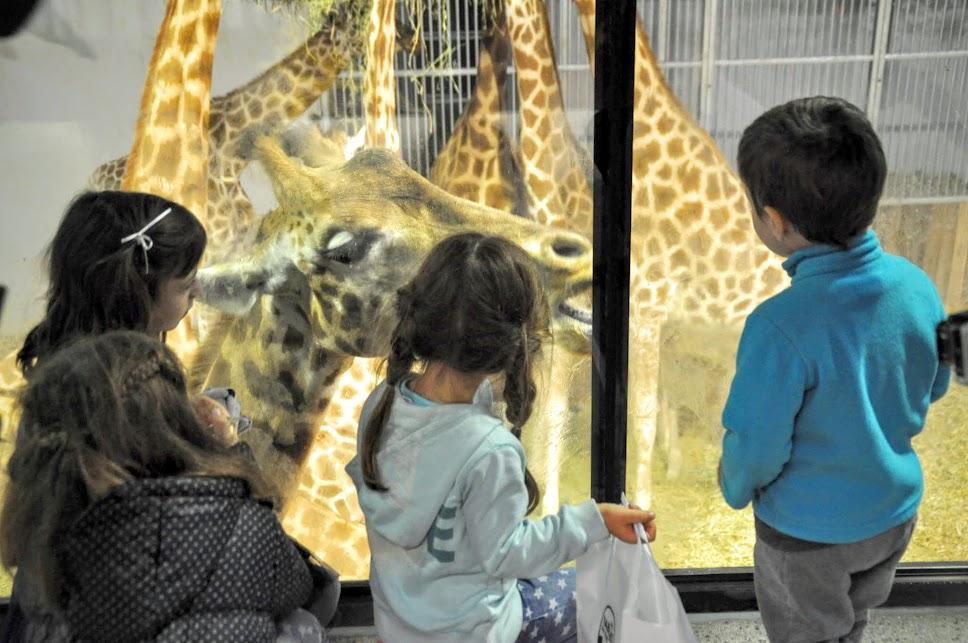 petit-dejeuner-avec-les-girafes-zoo-paris