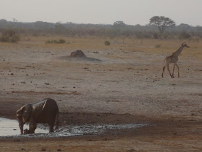 Photo: Mother and baby elephant in the waterhole as giraffe walks away