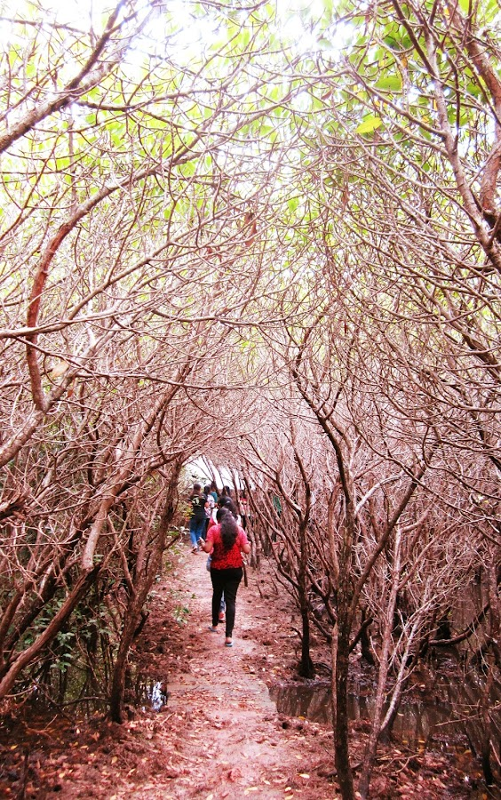 by SuChani Shehara - Nature Up Close Trees & Bushes