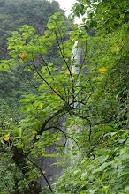 Photo: chute du Carbet