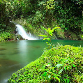 Green Pastures by Hiram Abanil - Landscapes Forests ( waterfalls, green )